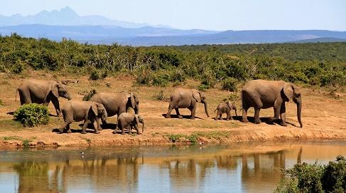 olifanten afrika