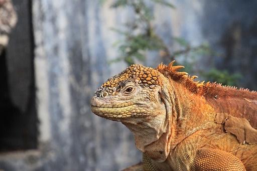 galapagos eilanden ecuador