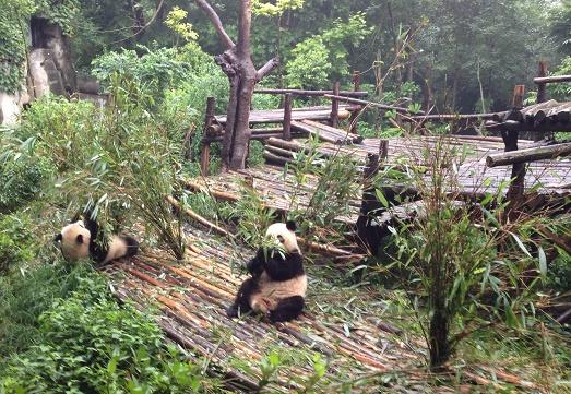 Chengdu Panda Zoo